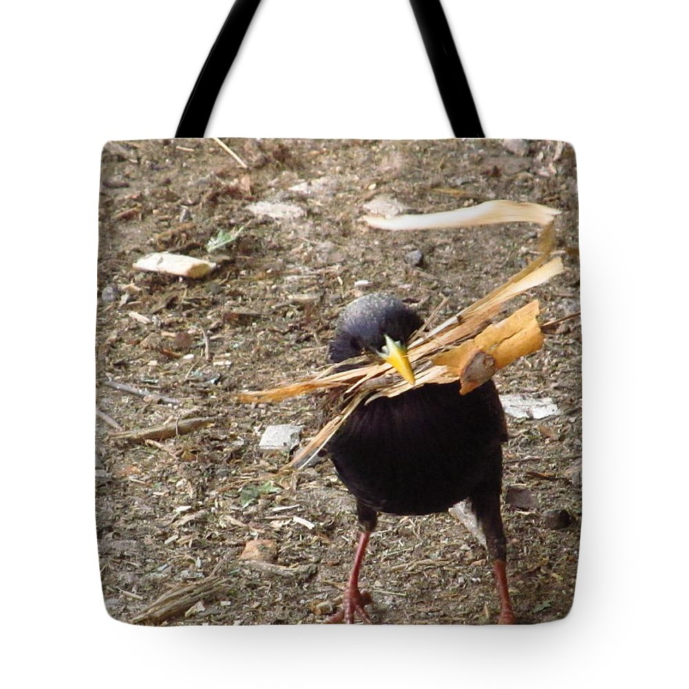 Bird Tote Bag featuring the photograph Who Needs Home Depot by Alfred Ng