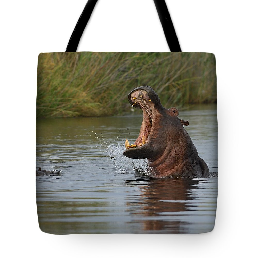 Hippopotamus Tote Bag featuring the photograph Wide Open by Tony Beck