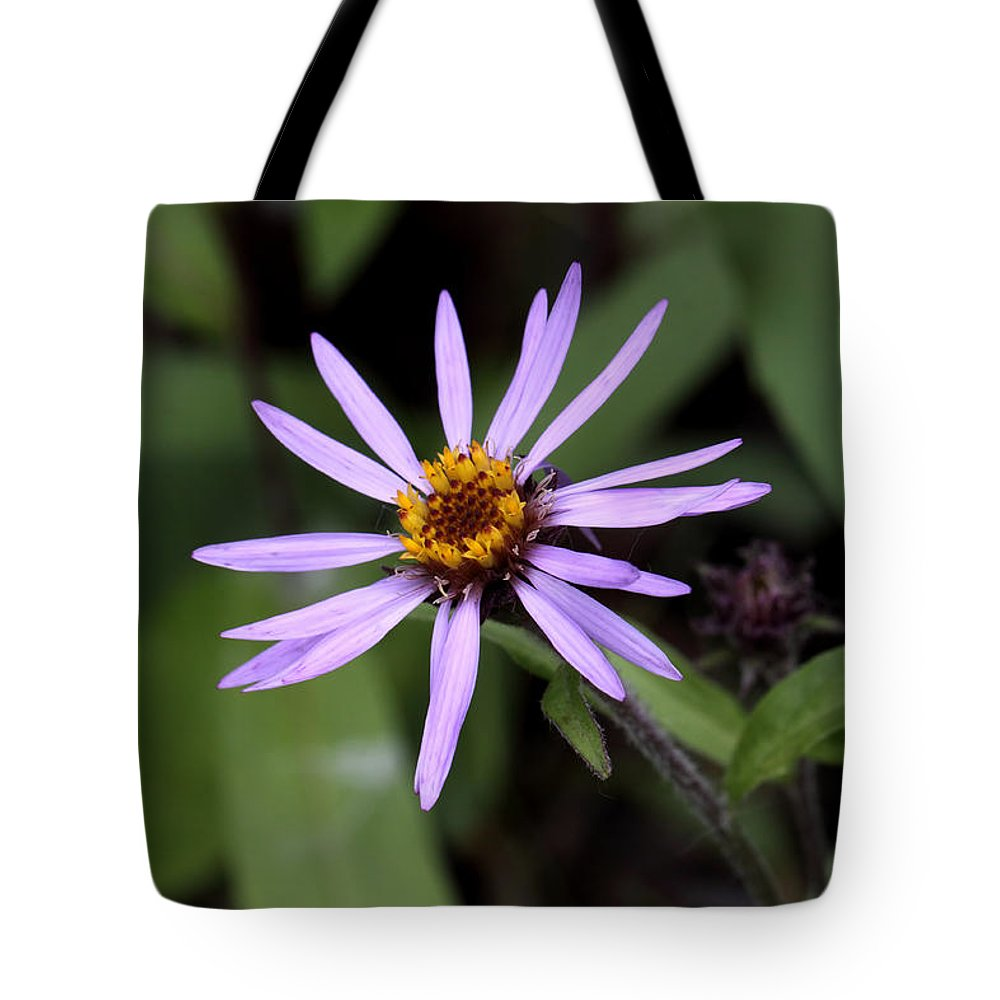 Doug Lloyd Tote Bag featuring the photograph Wild Aster by Doug Lloyd
