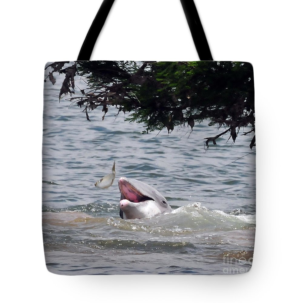 Wild Dolphin Tote Bag featuring the photograph Wild Dolphin Feeding by Paul Ward