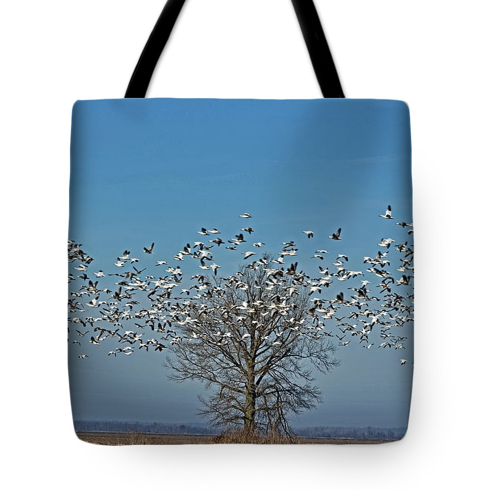 Landscapes Tote Bag featuring the photograph Wild Geese IIi by Debbie Portwood
