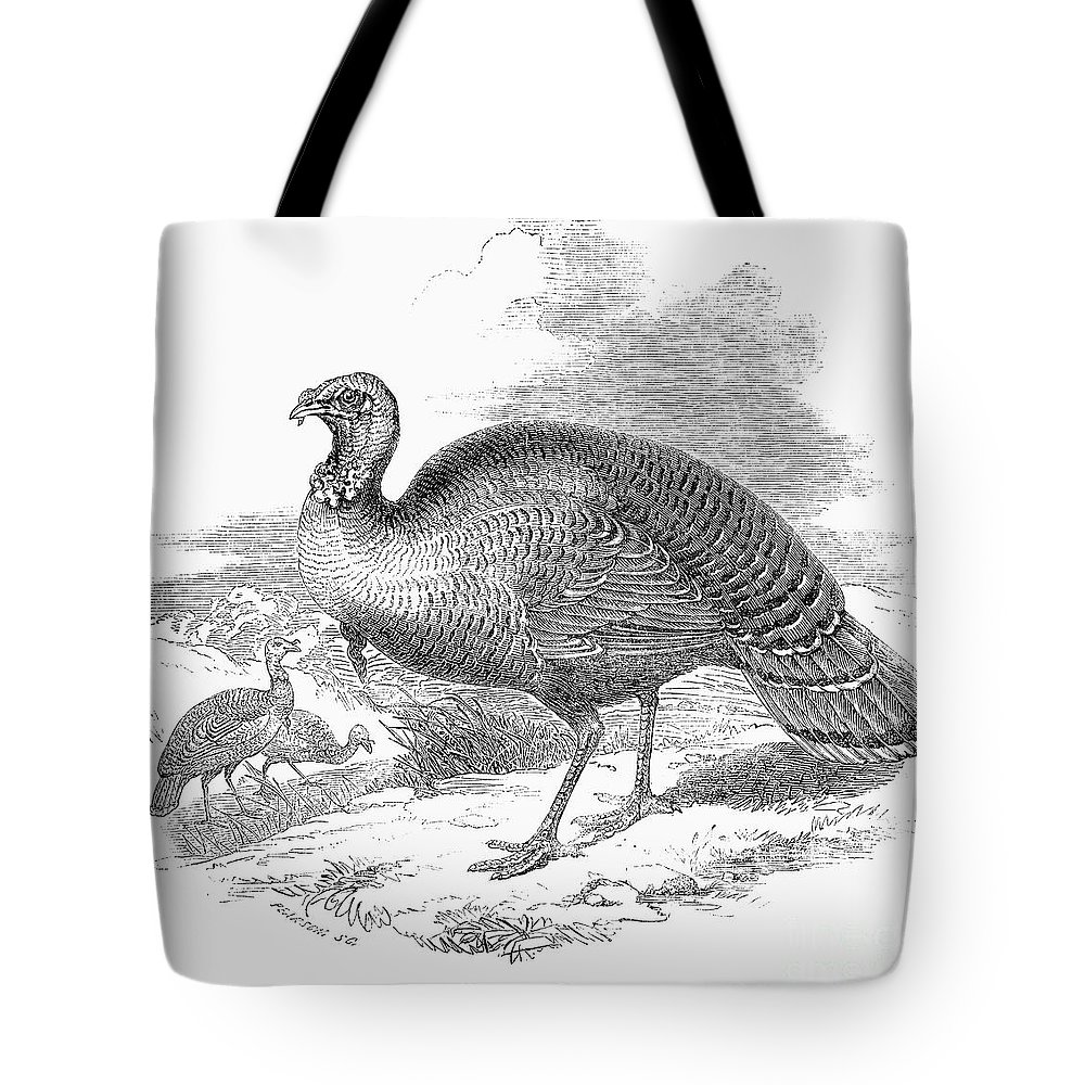 1853 Tote Bag featuring the photograph Wild Turkey, 1853 by Granger