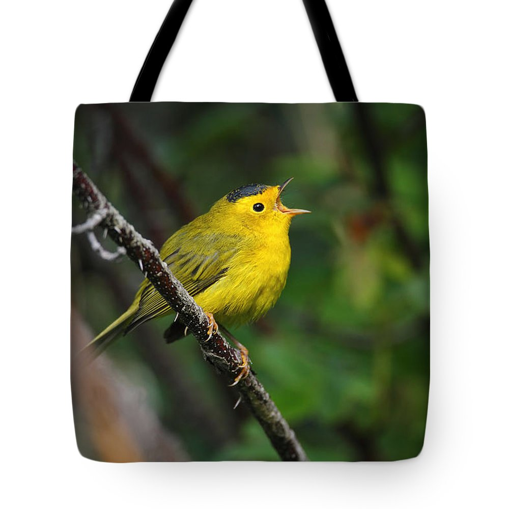 Doug Lloyd Tote Bag featuring the photograph Wilsons Warbler In Song by Doug Lloyd