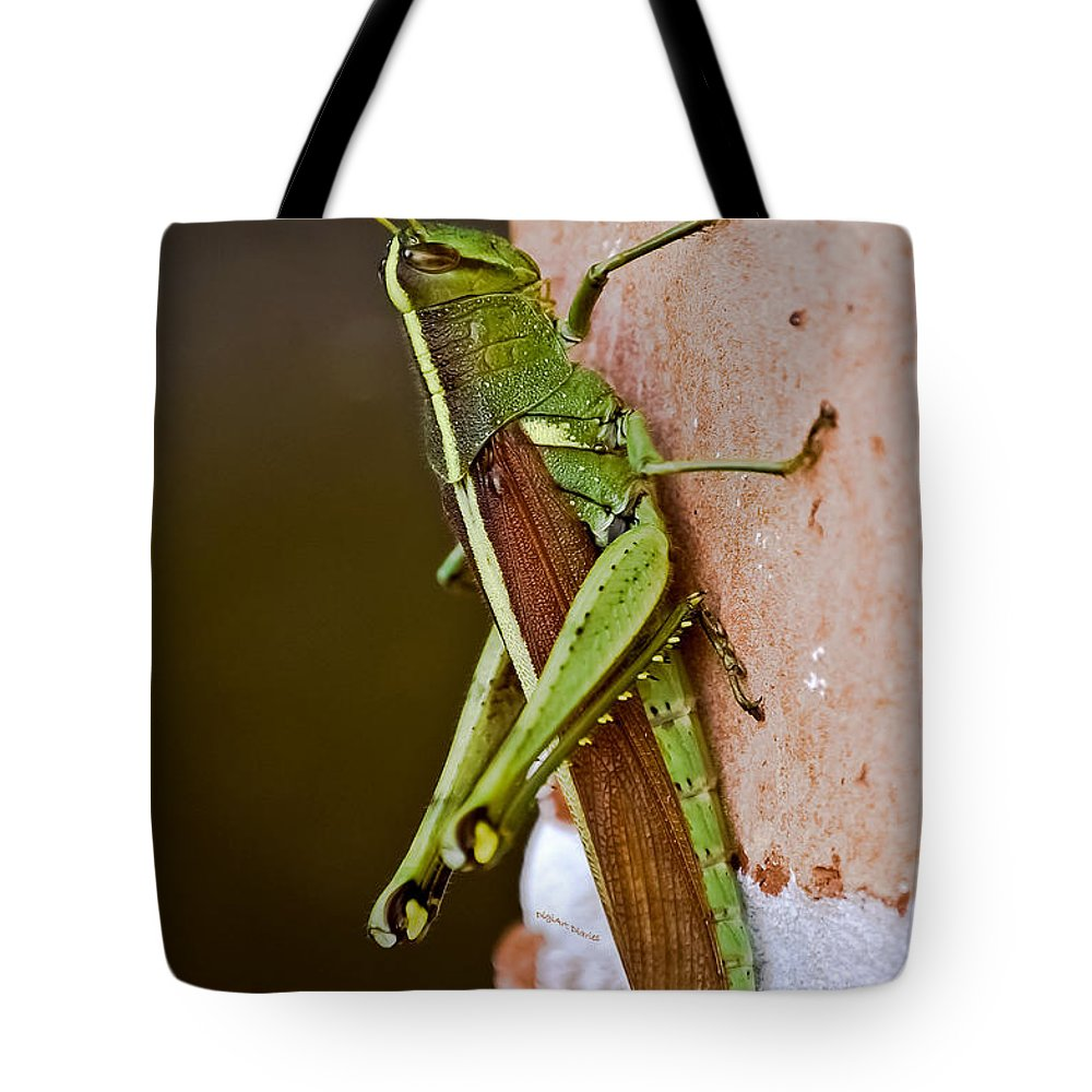 Grasshopper Tote Bag featuring the photograph Wings In Brown by DigiArt Diaries by Vicky B Fuller