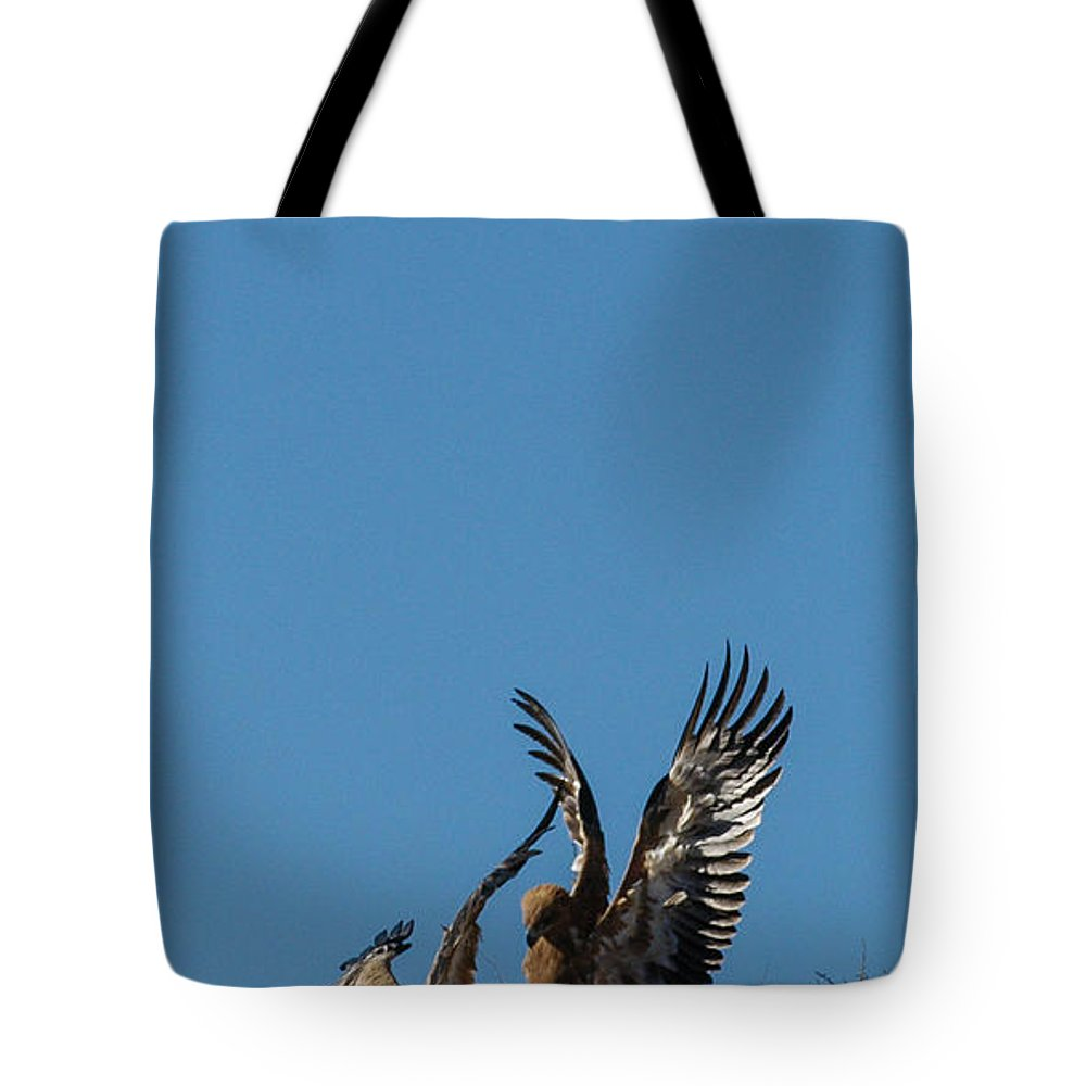 Action Tote Bag featuring the photograph Wings Up by Alistair Lyne