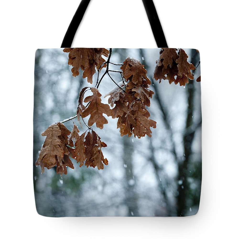 Sandra Bronstein Tote Bag featuring the photograph Winter Takes Hold by Sandra Bronstein