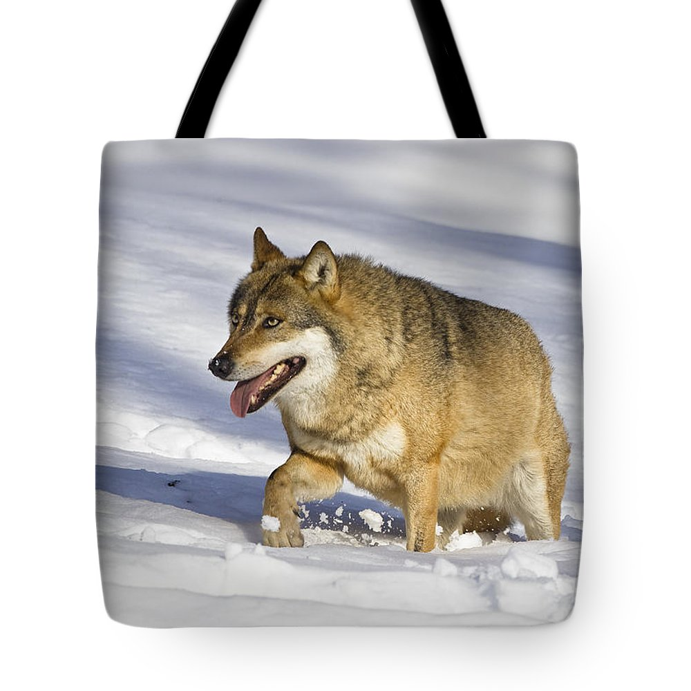Mp Tote Bag featuring the photograph Wolf Canis Lupus Walking In Snow by Konrad Wothe