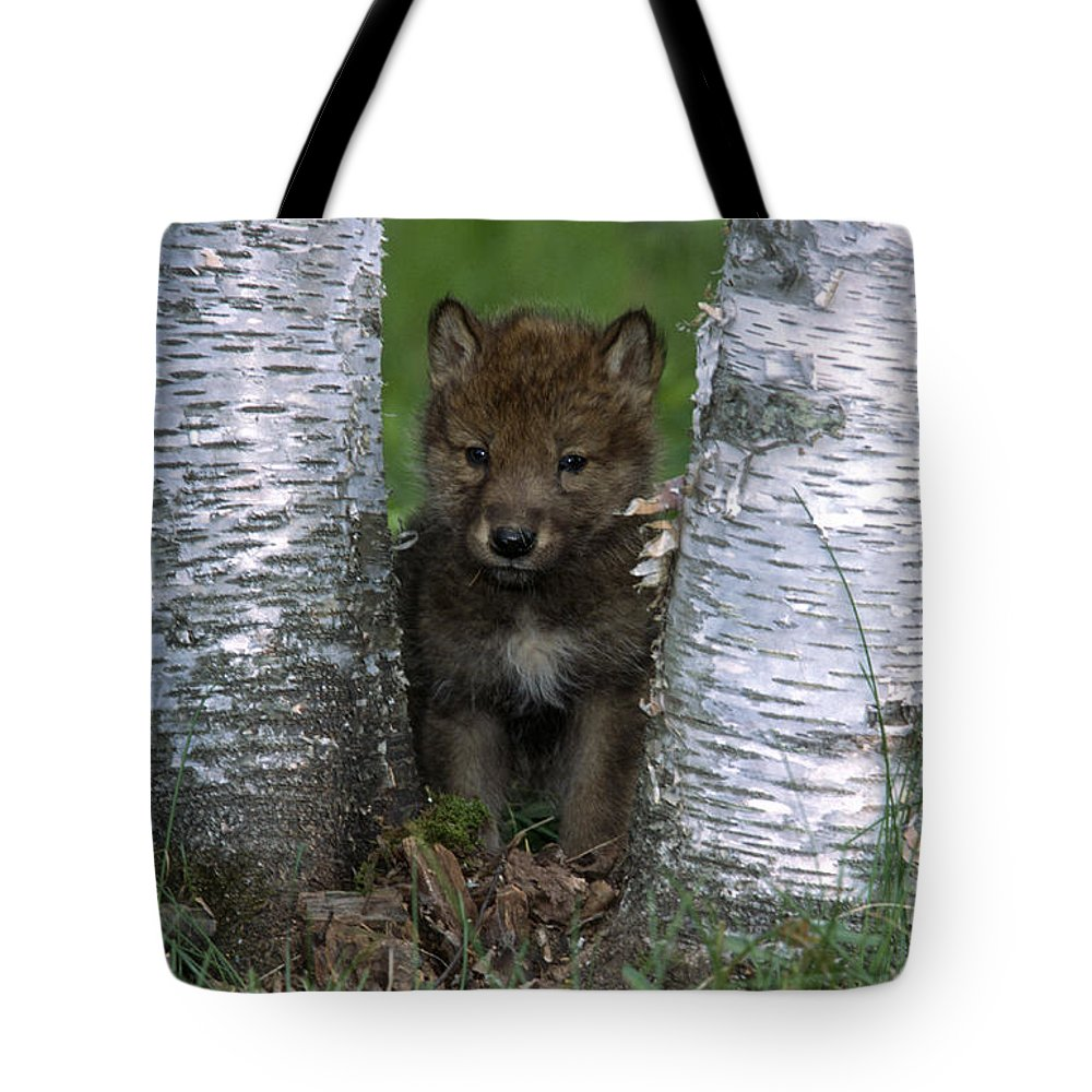 Wolves Tote Bag featuring the photograph Wolf Pup Playing Peekaboo by Sandra Bronstein