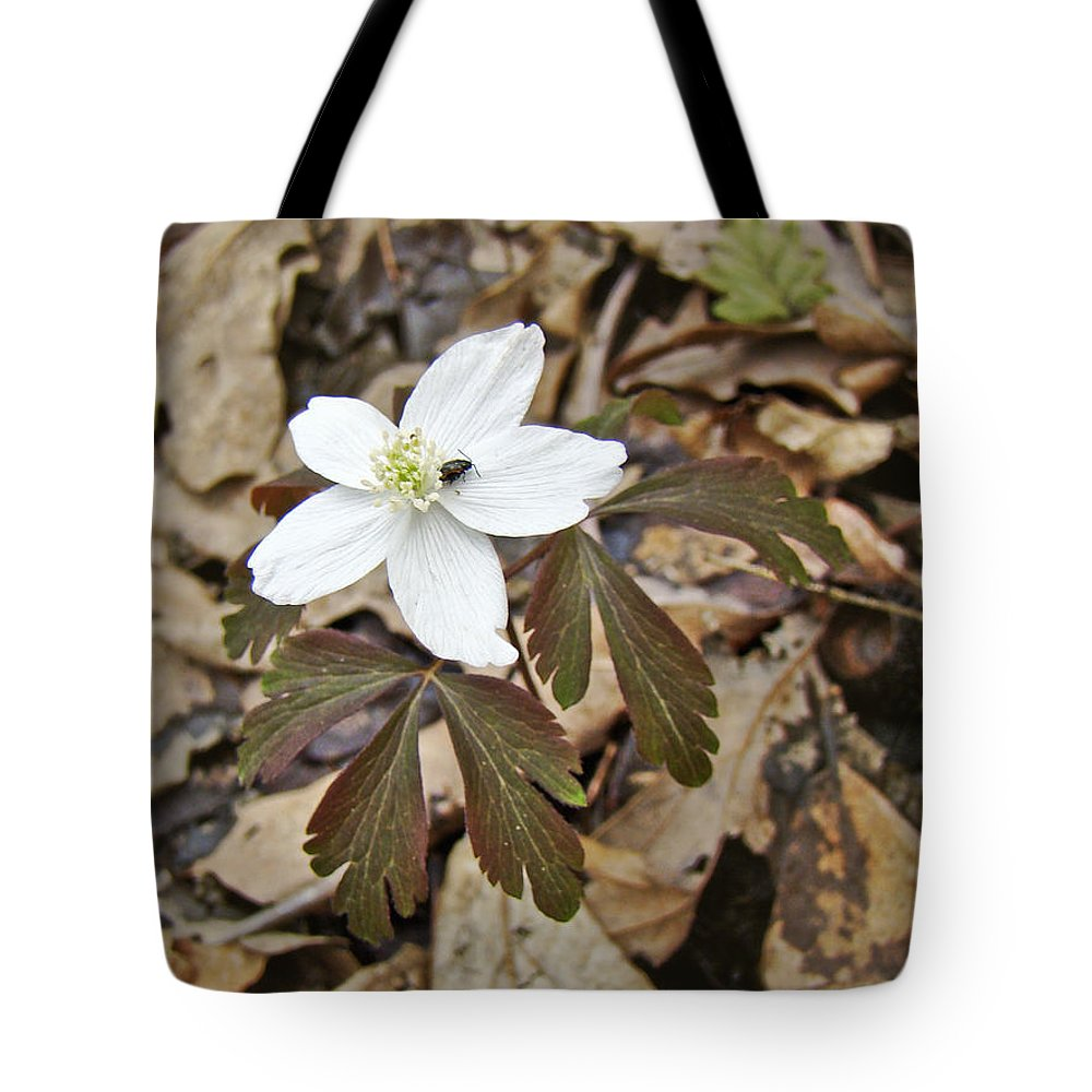 Anemone Tote Bag featuring the photograph Wood Anemone - Anemone Quinquefolia by Mother Nature