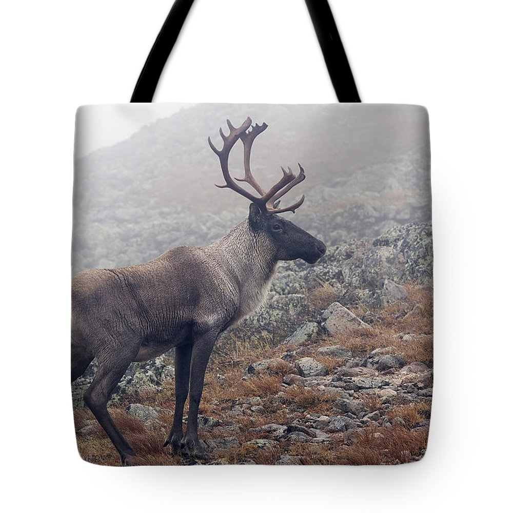 Animals In The Wild Tote Bag featuring the photograph Woodland Caribou Walking On Alpine by Philippe Henry
