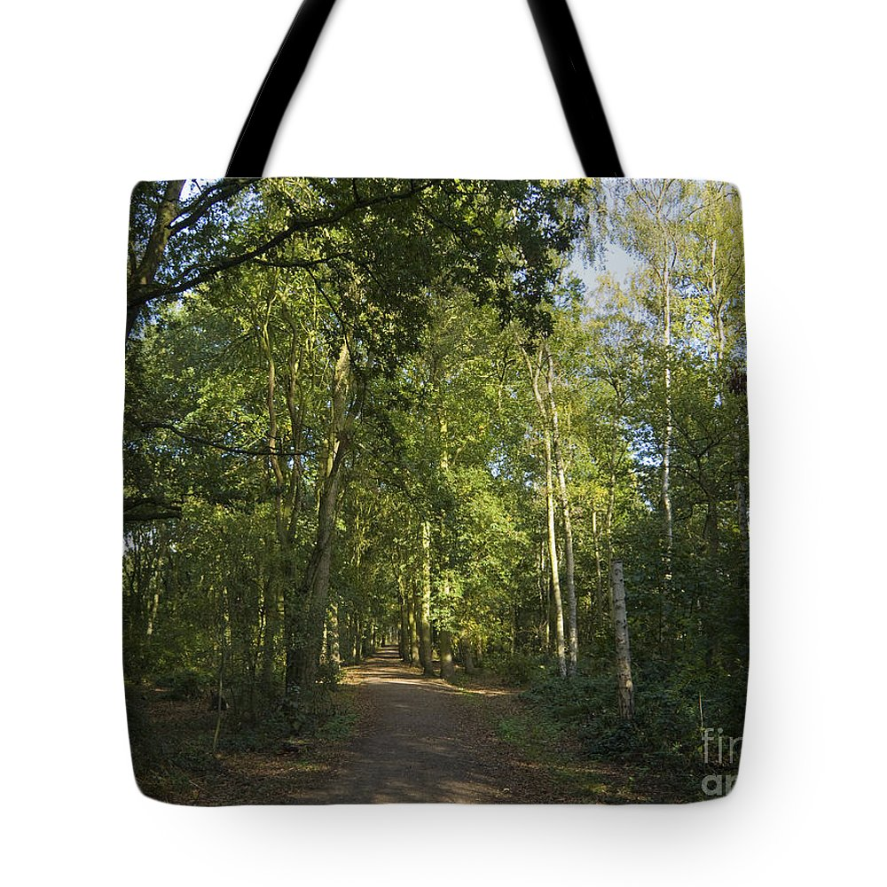 Woodland Tote Bag featuring the photograph Woodland Walk 2 by Steev Stamford
