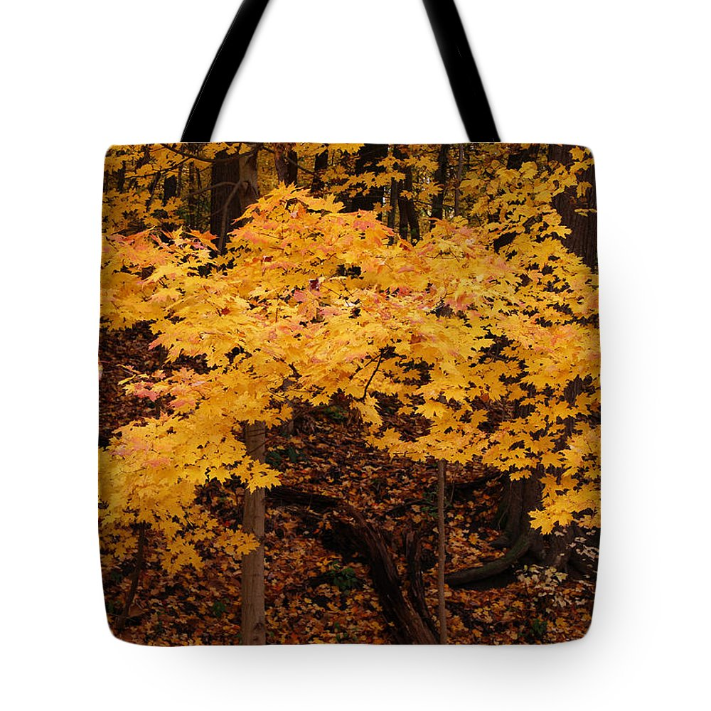 Woods Of Yellow Tote Bag featuring the photograph Woods Of Yellow by Rachel Cohen