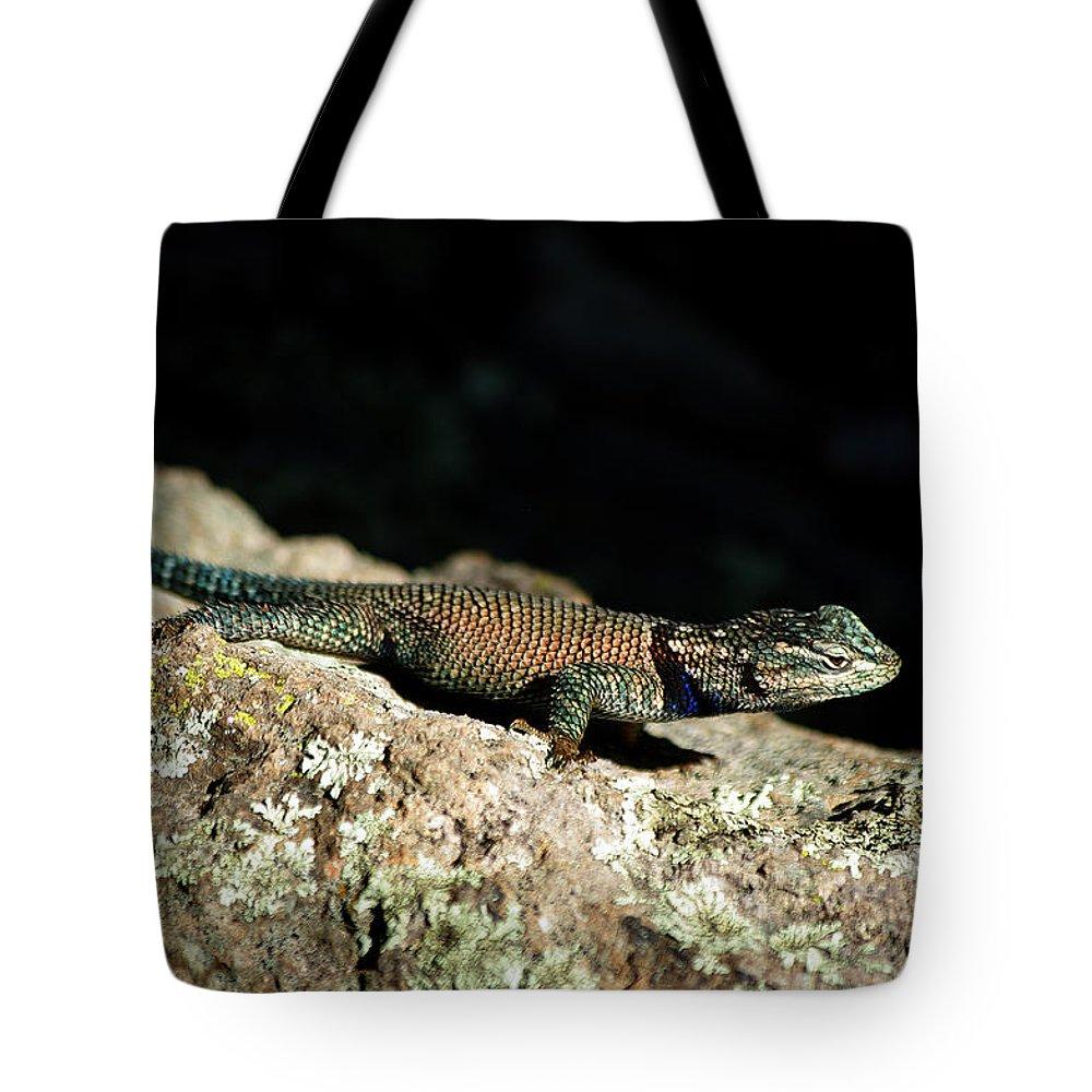 Lizard Tote Bag featuring the photograph Yarrow's by Vicki Pelham