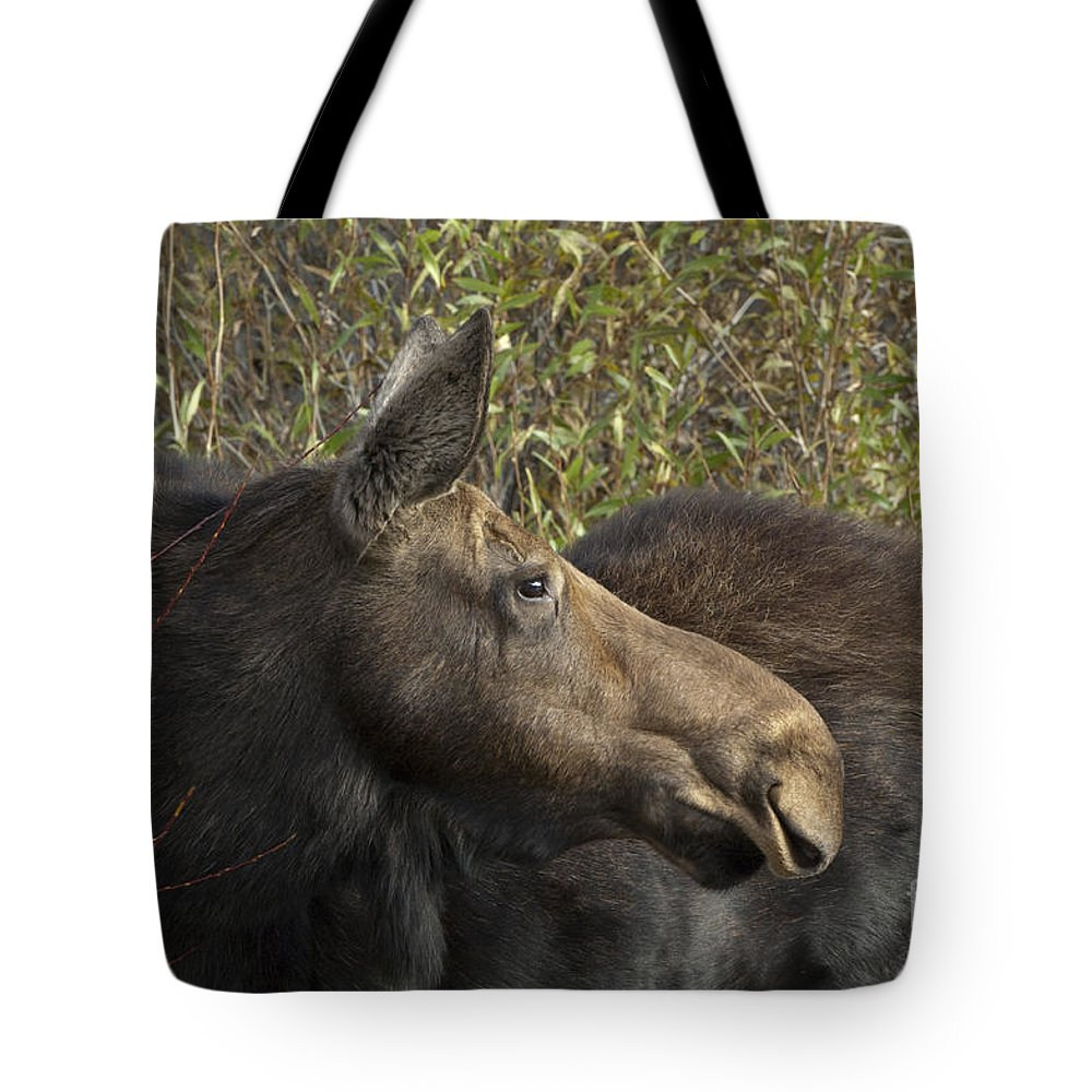 Bronstein Tote Bag featuring the photograph Yearling Calf On Alert by Sandra Bronstein