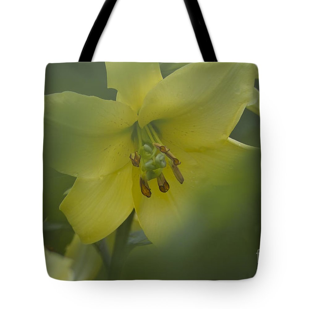 Nature Tote Bag featuring the photograph Yellow Lily Flower by Heiko Koehrer-Wagner