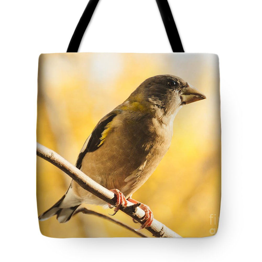 Grosbeak Tote Bag featuring the photograph Yellow Perch by Cheryl Baxter