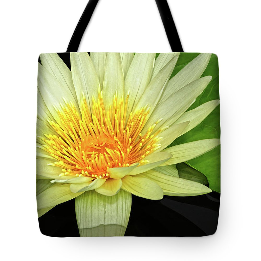 Waterlily Tote Bag featuring the photograph Yellow Waterlily by Dave Mills