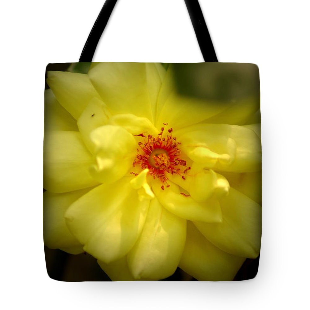 Yellowrose Tote Bag featuring the photograph Yellowrose by David Weeks