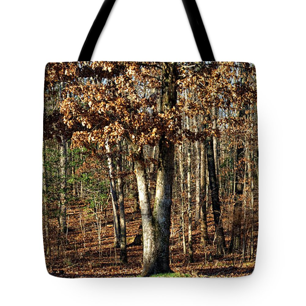 Trees Tote Bag featuring the photograph You Can Dream by Shari Nees