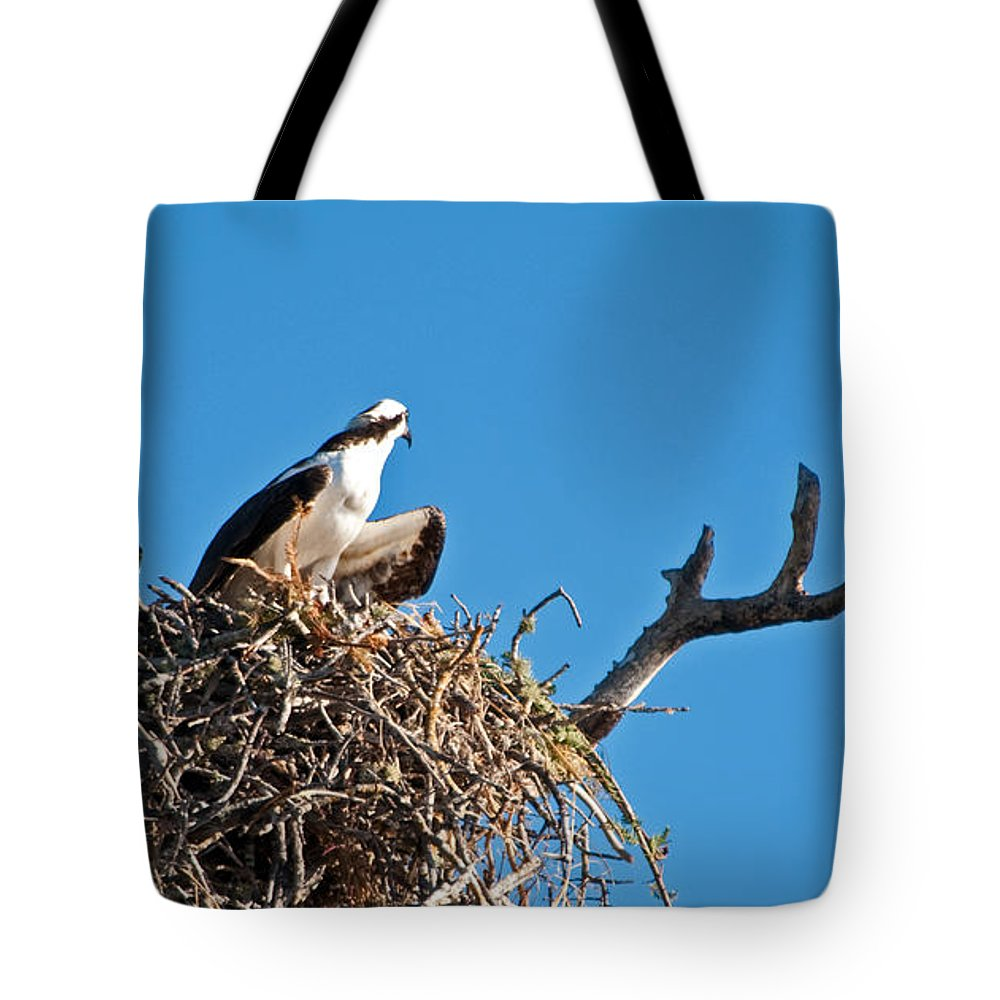 Osprey Tote Bag featuring the photograph You Lookin At Me by Christine Stonebridge