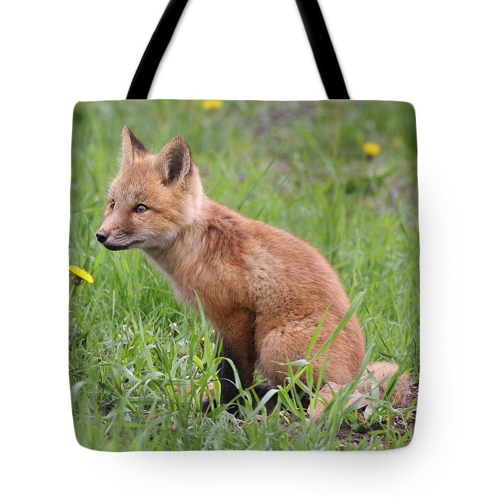 Red Fox Tote Bag featuring the photograph Young Fox Among The Dandelions by Doris Potter