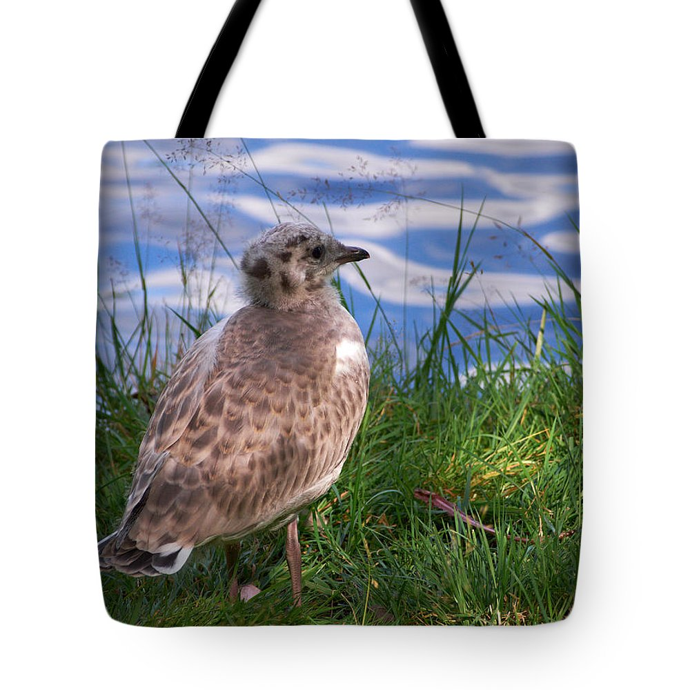 Aulanko Tote Bag featuring the photograph Young Gull by Jouko Lehto
