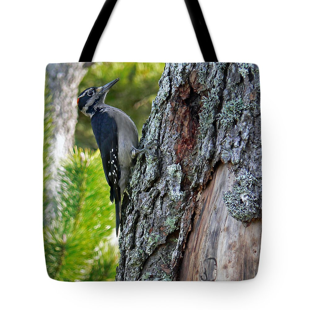 Bird Tote Bag featuring the photograph Young Woody Makes A Home by Pamela Patch
