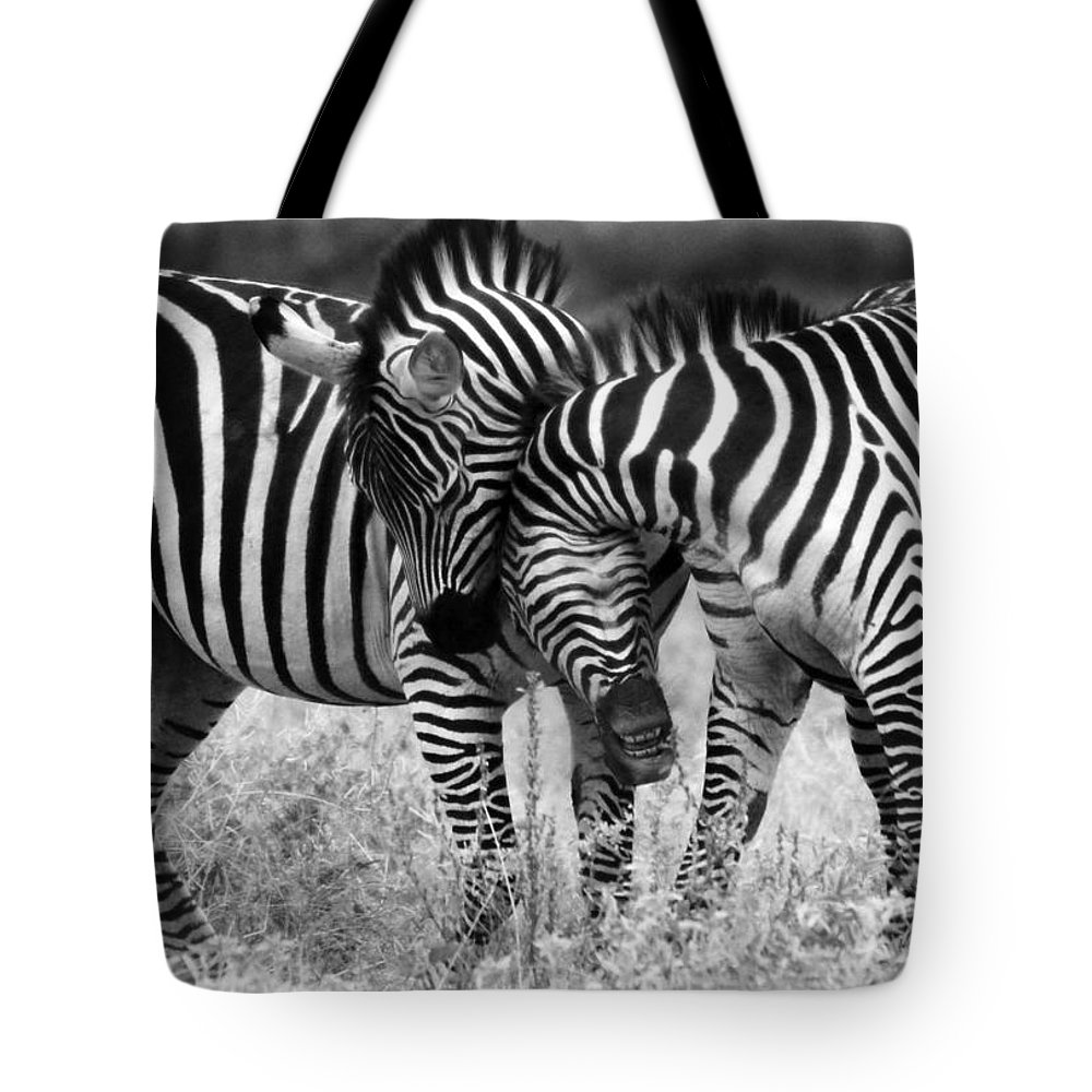 Africa Tote Bag featuring the photograph Zebra Hug 2 by Jack Daulton