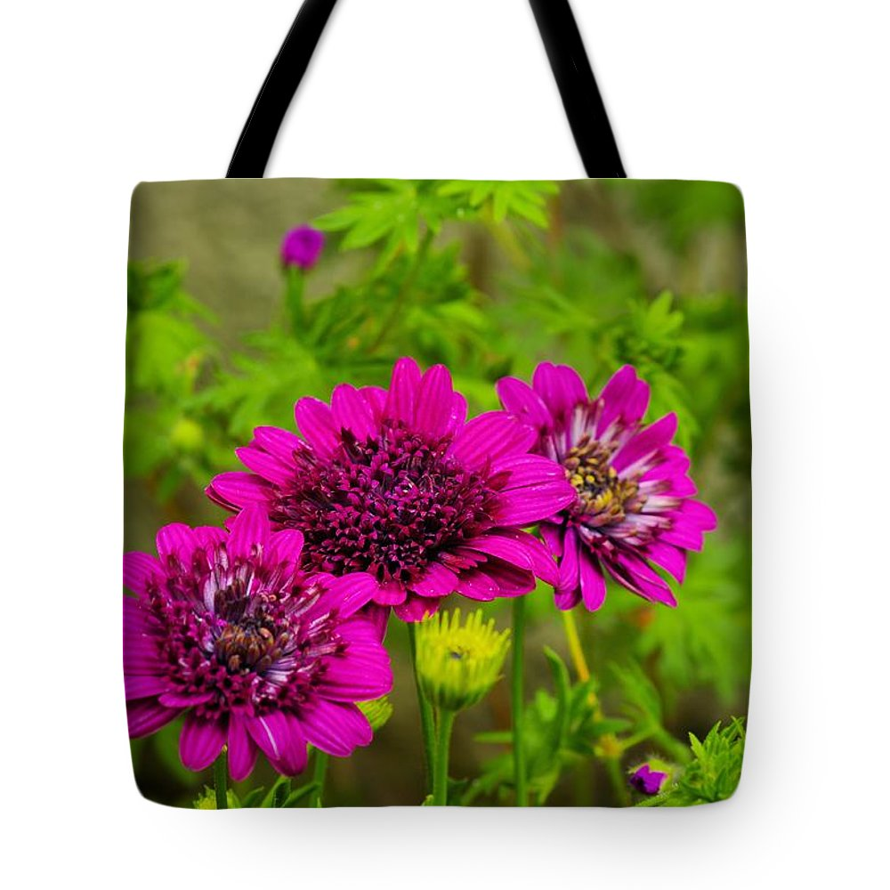 Zinnia Tote Bag featuring the photograph Zinnias by John Greaves
