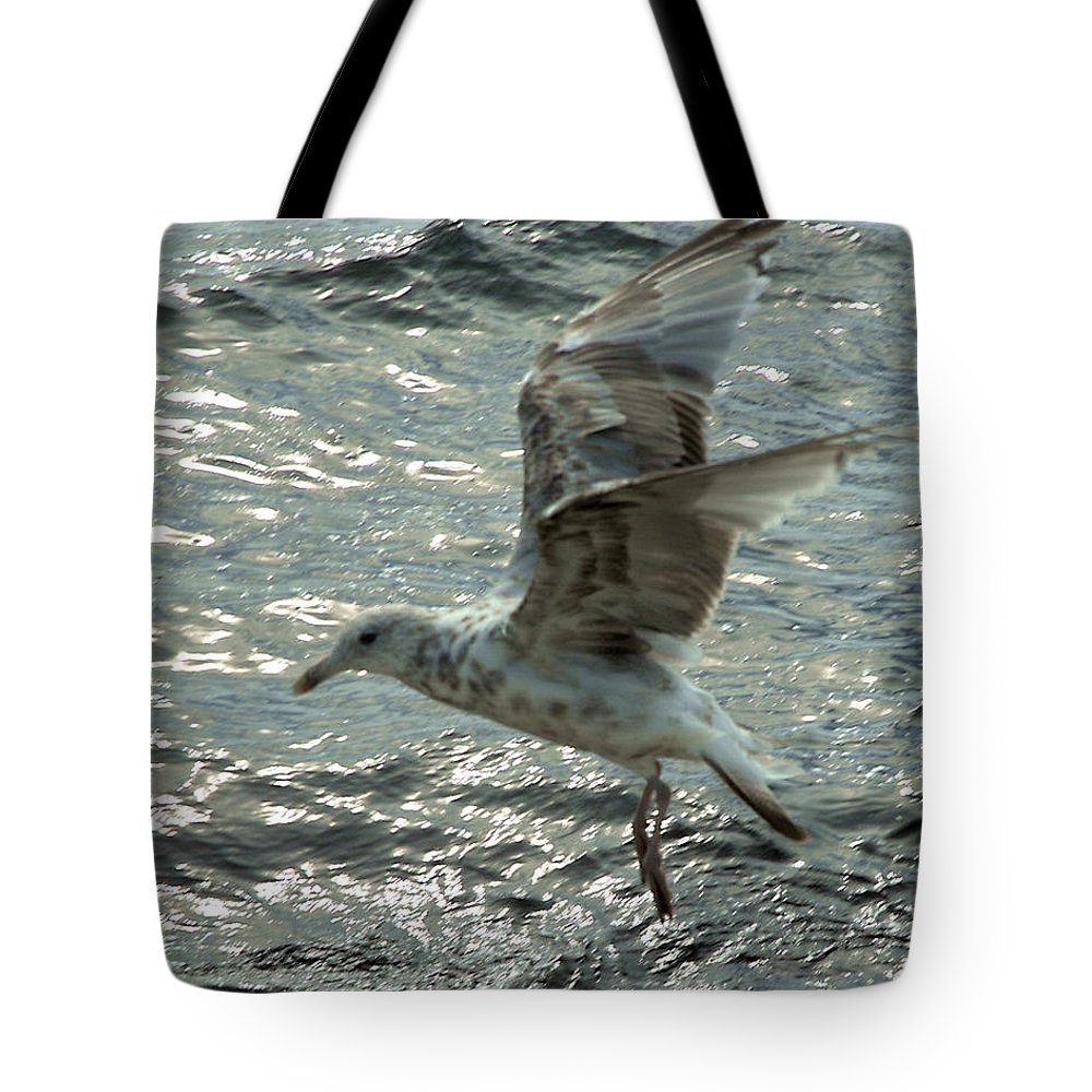 Seagull Tote Bag featuring the photograph About To Land by Barry Doherty
