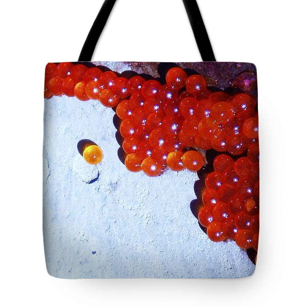 Photograph Fish Egg Lake Water Rock Tote Bag featuring the photograph Don't Kill Me. by Seon-Jeong Kim