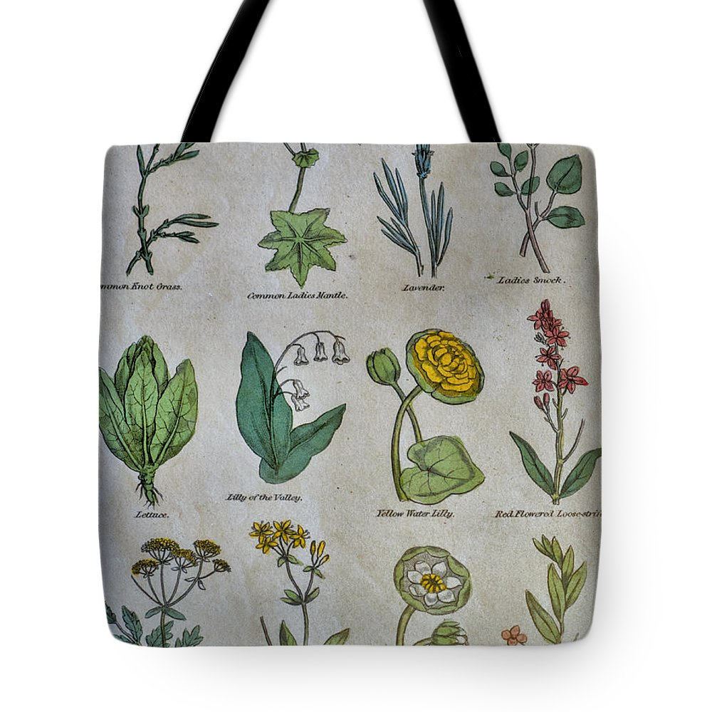 Natural History Tote Bag featuring the photograph Lithography Of Common Flowers by Ilan Rosen