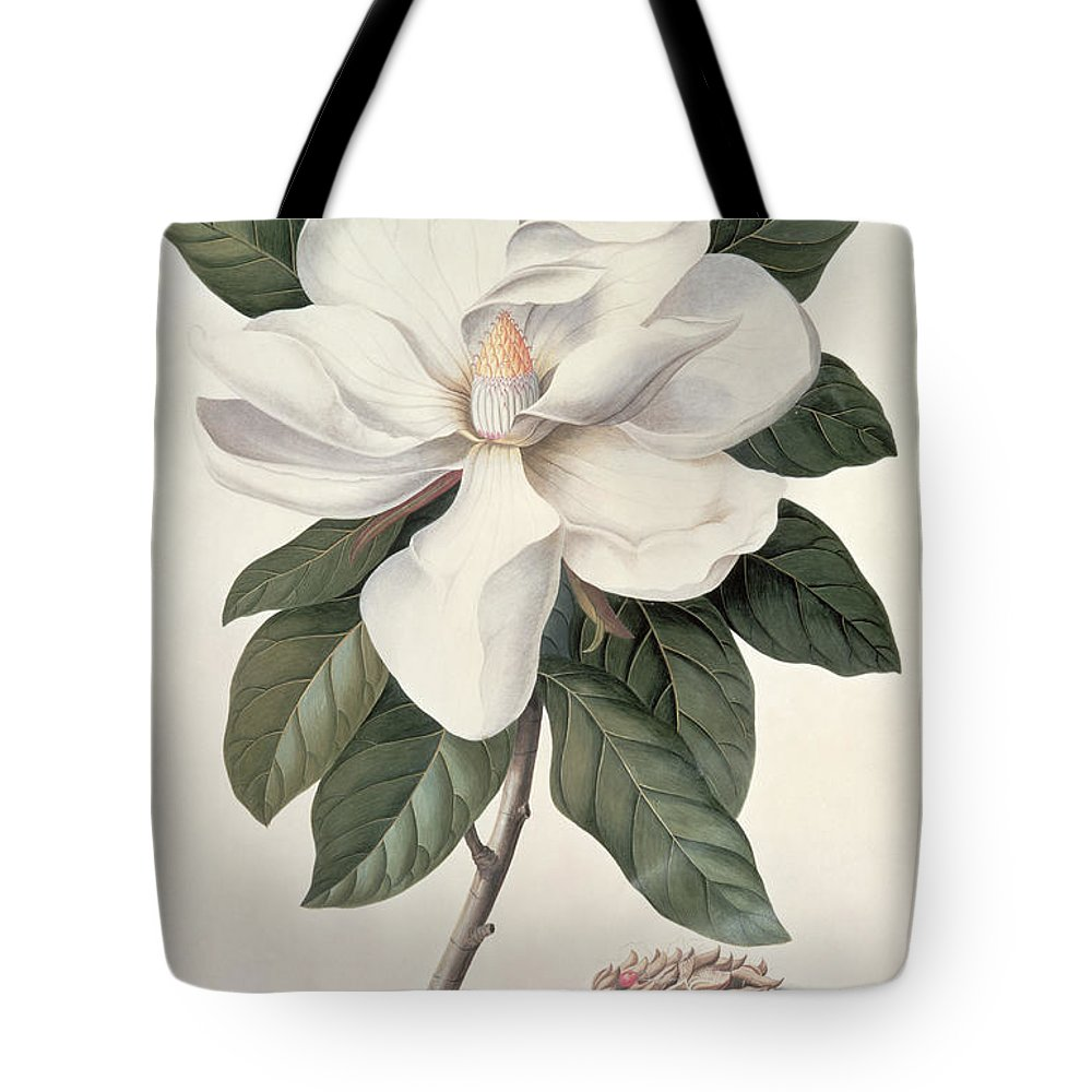 Plant; Flower Tote Bag featuring the painting Magnolia by Georg Dionysius Ehret