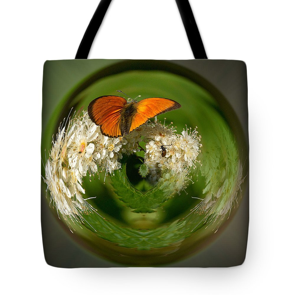 Lehtokukka Tote Bag featuring the photograph Scarce Copper 3 by Jouko Lehto