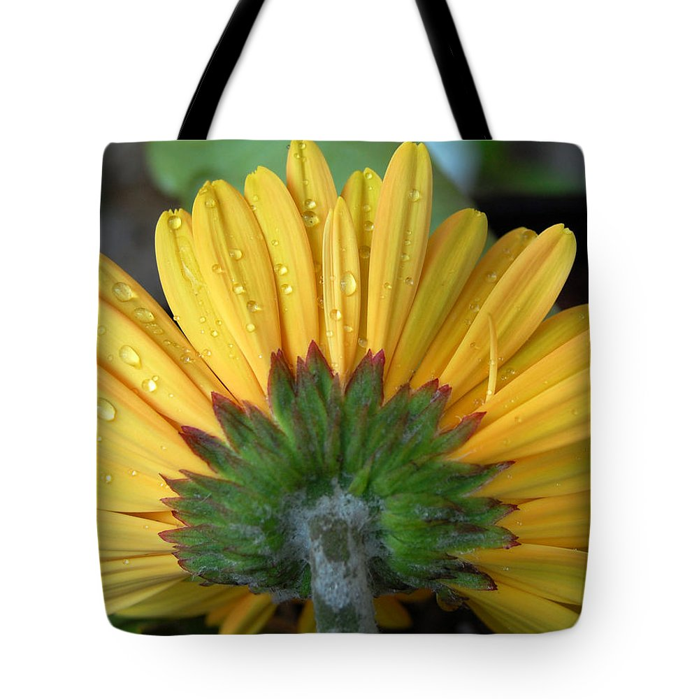 Flowers Tote Bag featuring the photograph Water Drops On Gerbera Daisy by Amy Fose