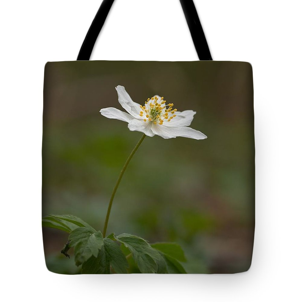 Lehtokukka Tote Bag featuring the photograph Wood Anemone by Jouko Lehto