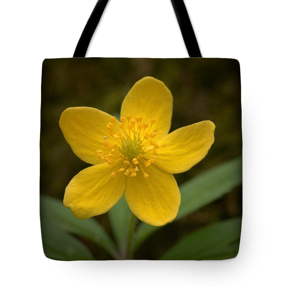 Lehtokukka Tote Bag featuring the photograph Yellow Wood Anemone by Jouko Lehto