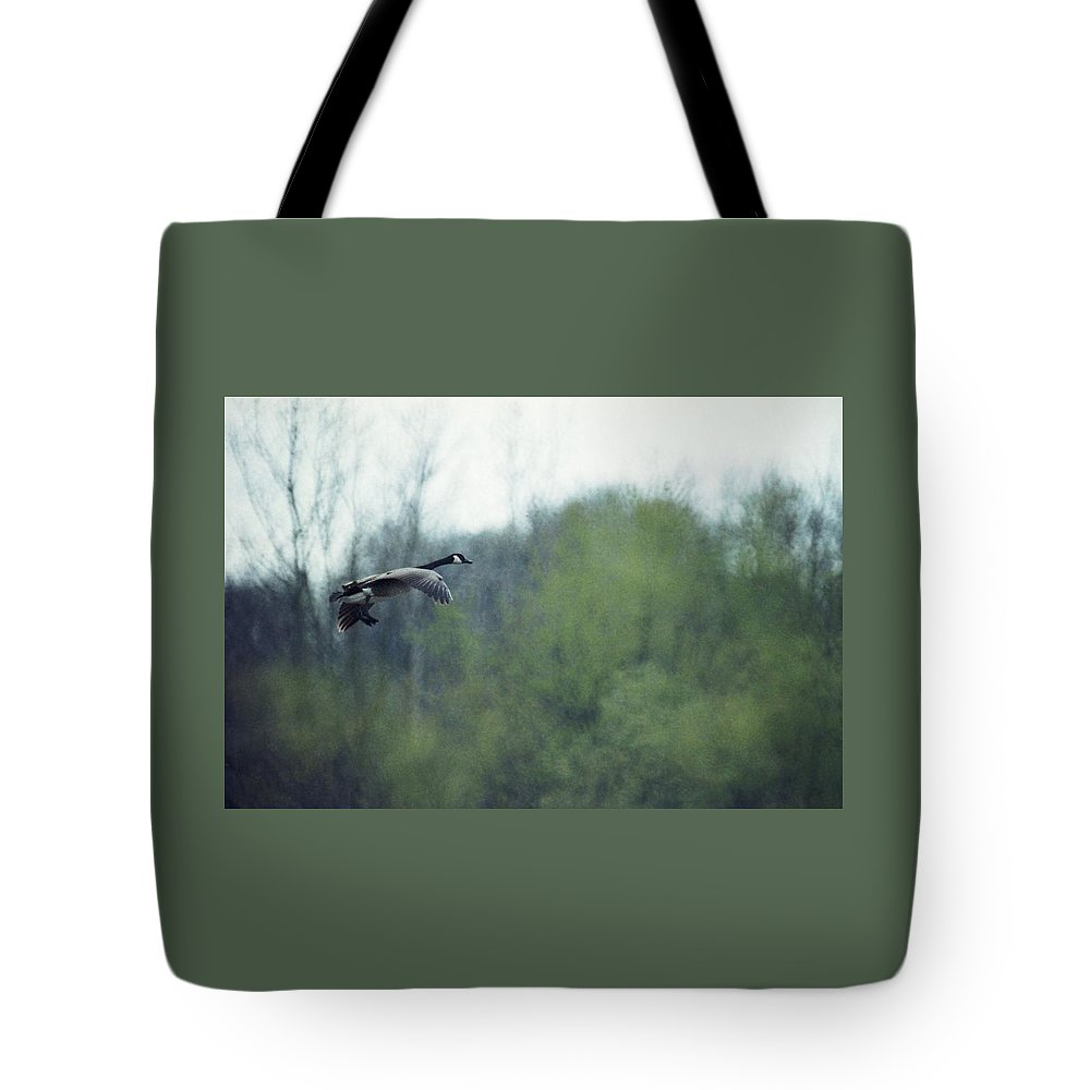 Canada Goose Tote Bag featuring the photograph 070406-40 by Mike Davis