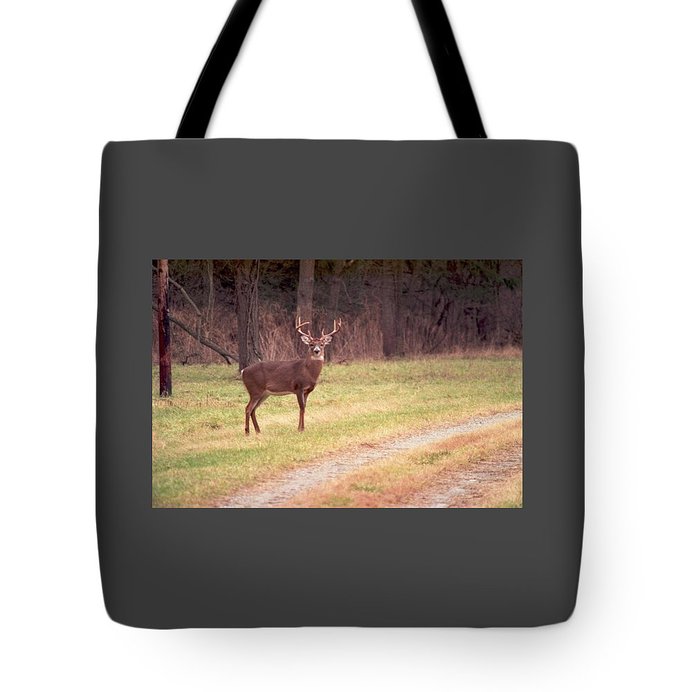 Deer Tote Bag featuring the photograph 070506-17 by Mike Davis