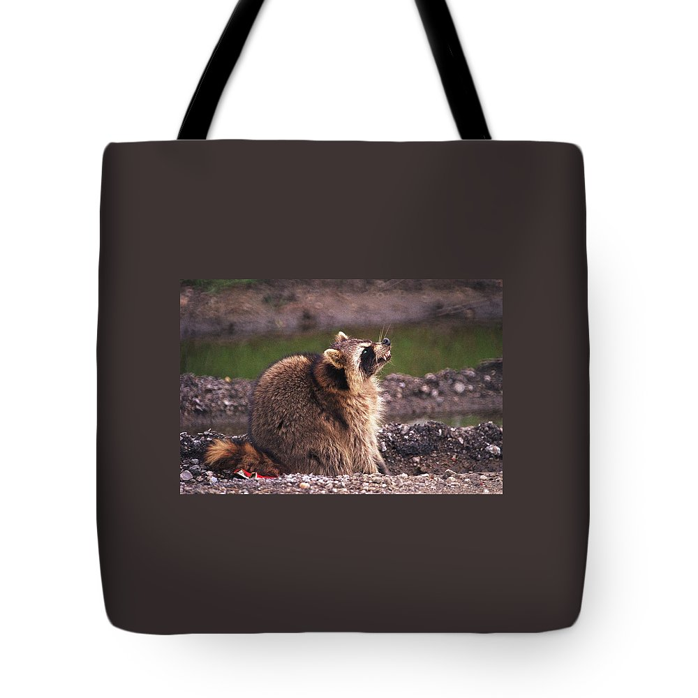 Raccoon Tote Bag featuring the photograph 070406-67 by Mike Davis