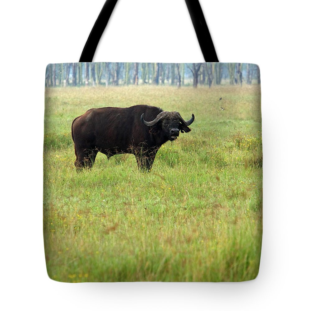 Water Buffalo Tote Bag featuring the photograph African Buffalo by Aidan Moran