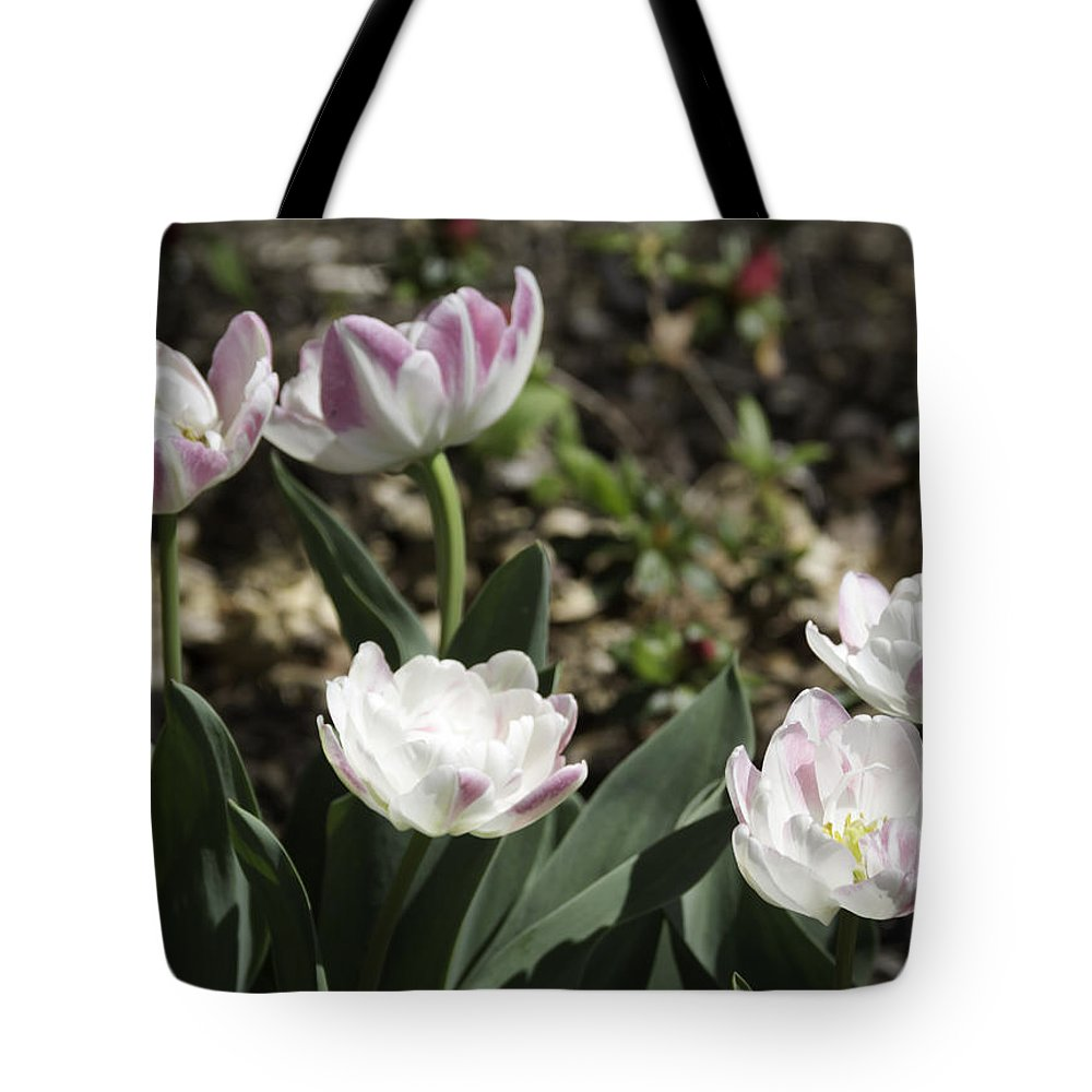 Flowers Tote Bag featuring the photograph Angelique Peony Tulips by Teresa Mucha