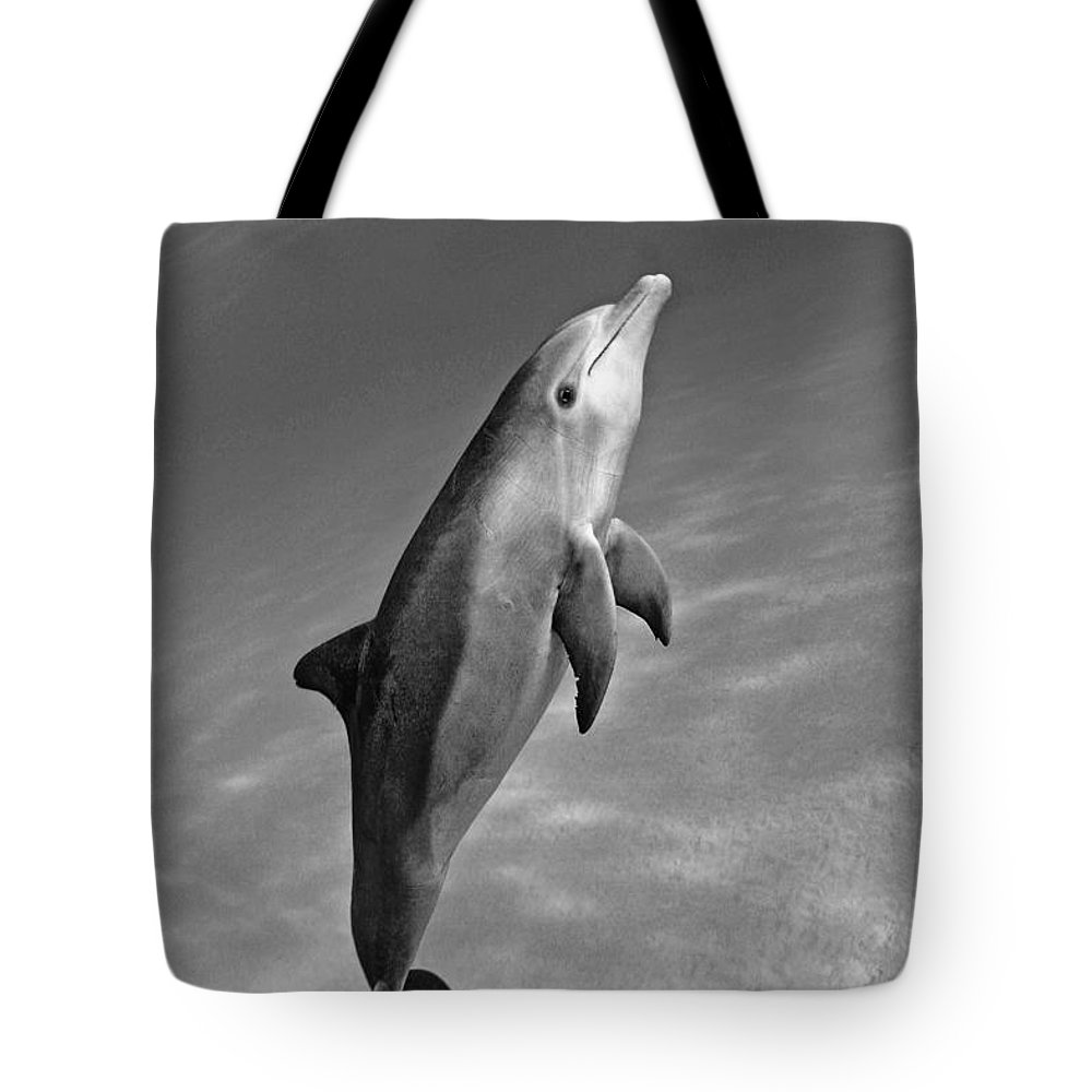 Animal Art Tote Bag featuring the photograph Atlantic Bottlenose Dolphin by Dave Fleetham - Printscapes