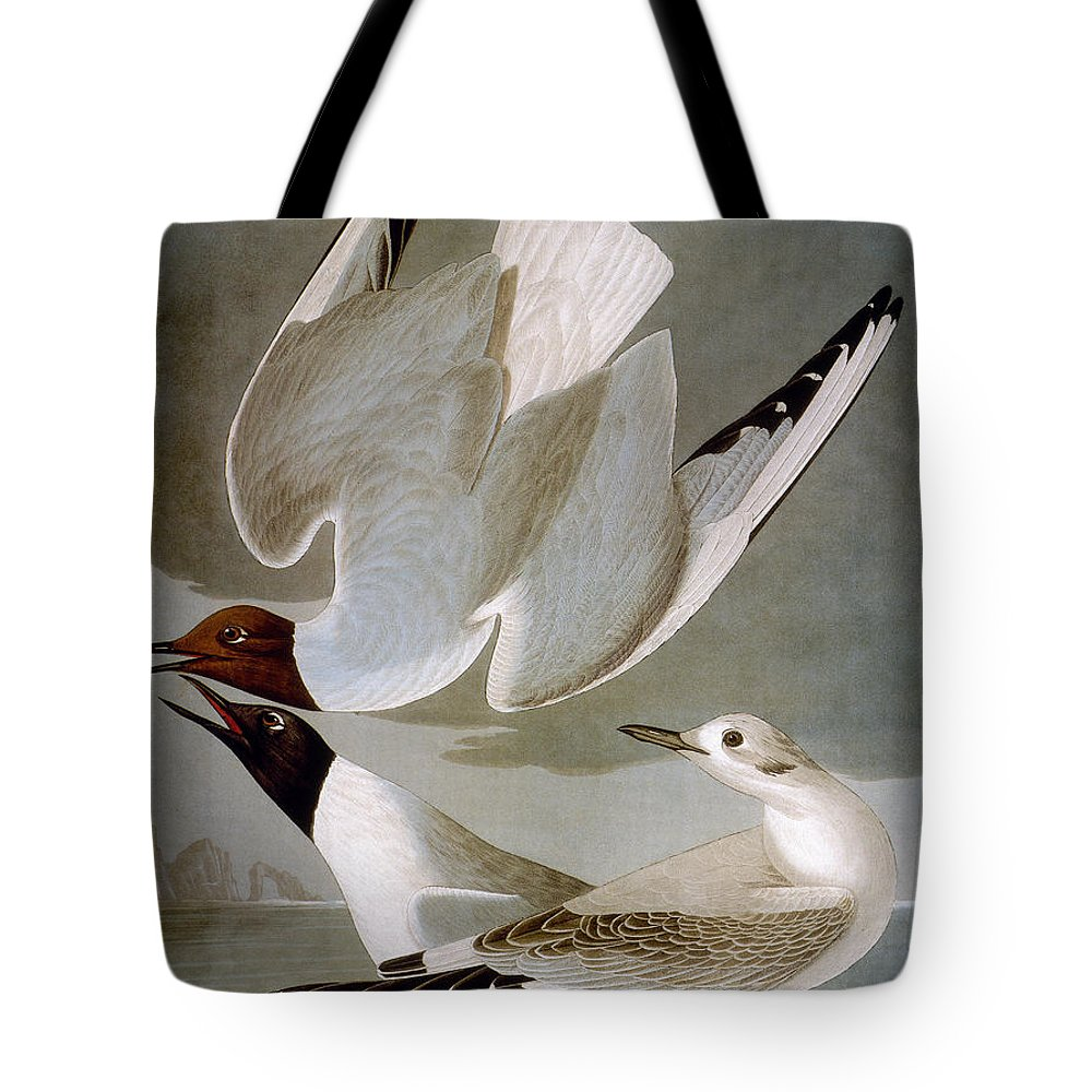 1838 Tote Bag featuring the photograph Audubon: Gull by Granger