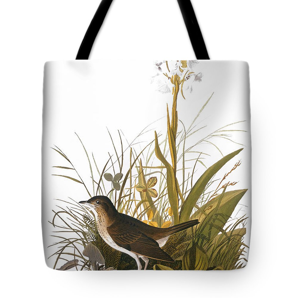 1838 Tote Bag featuring the photograph Audubon: Thrush by Granger