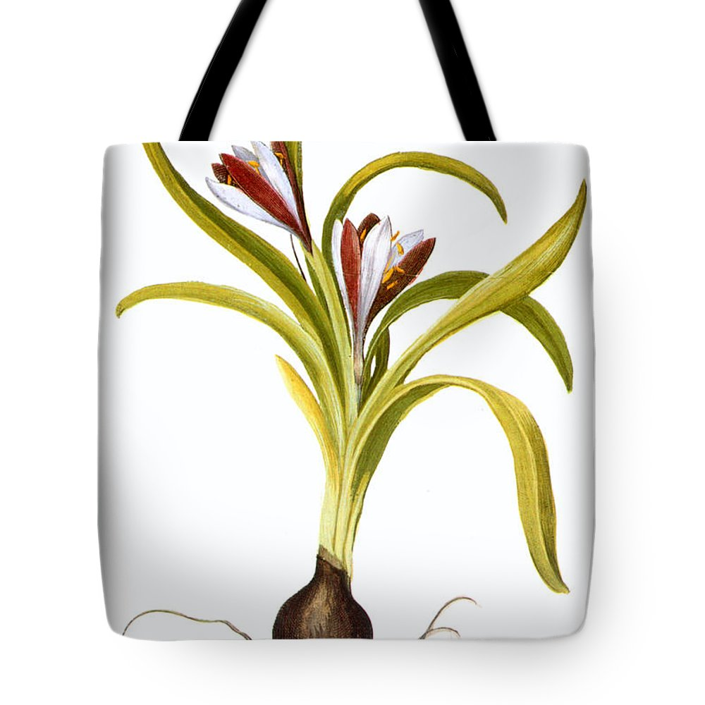 Biology Tote Bag featuring the photograph Autumn Crocus by Granger