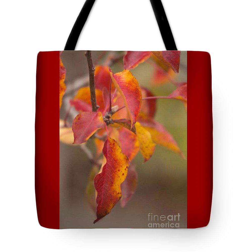 Autumn Tote Bag featuring the photograph Autumn Leaves by Marta Robin Gaughen