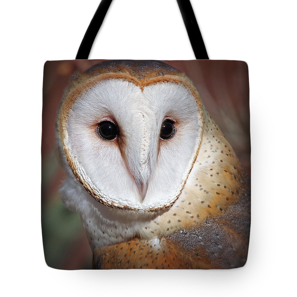 Owls Tote Bag featuring the photograph Barn Owl by Elaine Malott