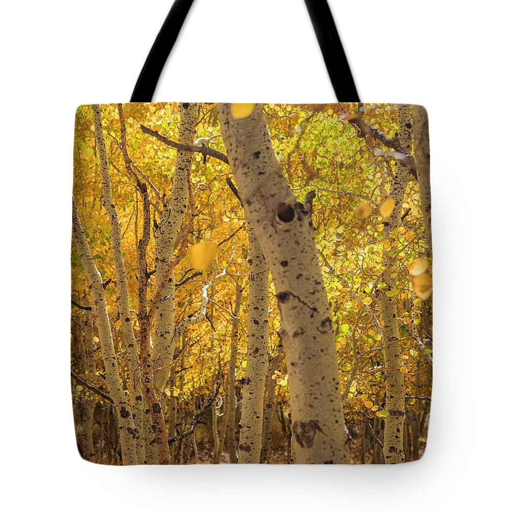 June Lake Loop Tote Bag featuring the photograph Beautiful Fall Color In California by Chon Kit Leong
