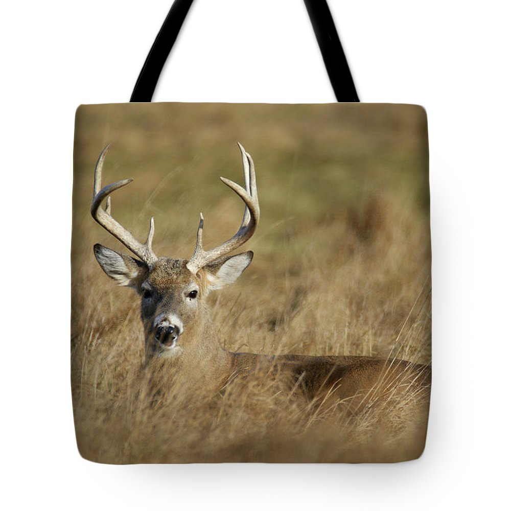 Buck Tote Bag featuring the photograph Bedded Buck by Brook Burling